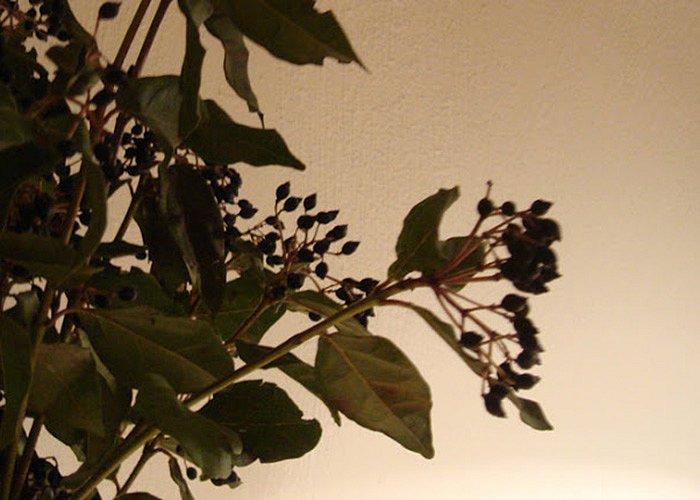 smakfoto-flowers2.jpg