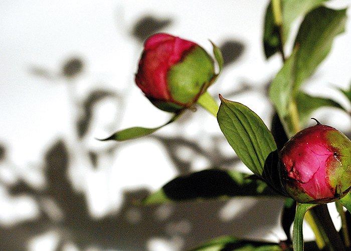 smakfoto-flowers3.jpg