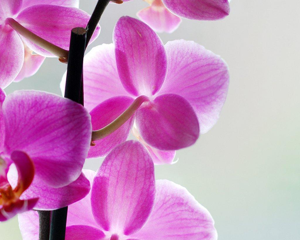 smakfoto-flowers4.jpg
